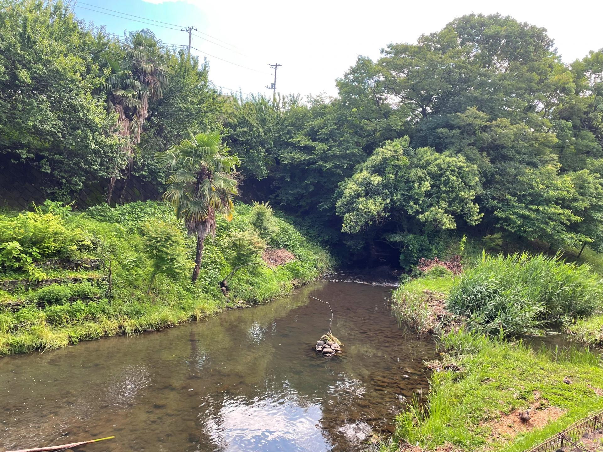 Vol.4 いたち川流域の野鳥観察について