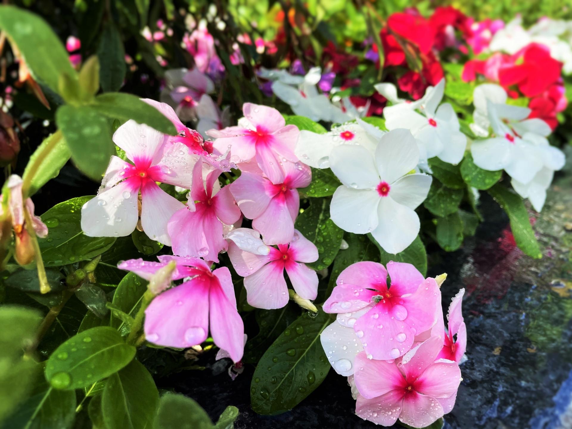 Vol.4ショールーム前の花壇の植え替え
